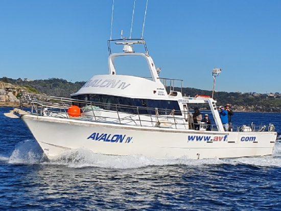 Wahoo Fishing Charters The Avalon Boat.